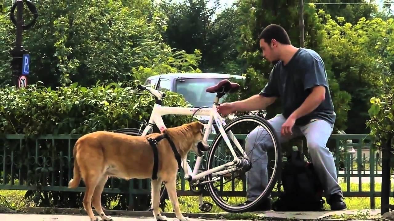hot de biciclete in bucuresti